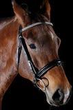 Paard dat op zwarte wordt geïsoleerdr Royalty-vrije Stock Afbeelding