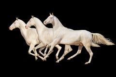 Paard dat op zwarte wordt geïsoleerdr Royalty-vrije Stock Foto