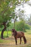 Paard dat zich op gebied bevindt Royalty-vrije Stock Afbeelding