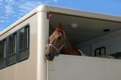 Paard in de aanhangwagen royalty-vrije stock afbeeldingen
