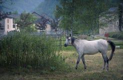 Paard in de aard stock fotografie