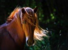 Paard in de aard royalty-vrije stock fotografie