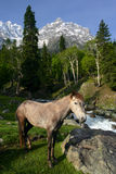 Paard in de bergen stock foto
