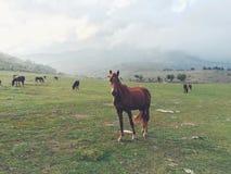 Paard in de bergen Stock Fotografie
