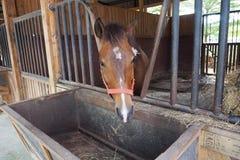Paard in de bijlage Stock Fotografie