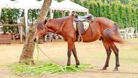 Paard in de dierentuin Royalty-vrije Stock Afbeeldingen