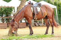 Paard in de dierentuin Stock Afbeelding