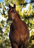 Paard in de herfst Royalty-vrije Stock Afbeeldingen