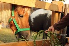 Paard in de kooi royalty-vrije stock afbeelding