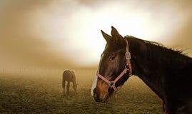 Paard in de mist Stock Foto