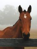 Paard in de Mist Stock Afbeeldingen