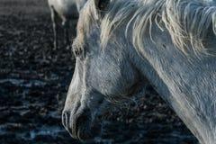 Paard in de moerasmodder Stock Fotografie