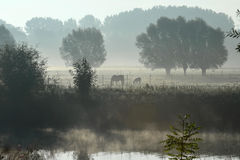 Paard in de ochtendmist Stock Foto's