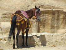 Paard in de oude stad van Petra, Jordanië Stock Afbeelding