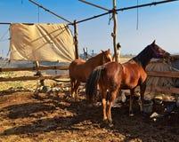 Paard in de paddock Royalty-vrije Stock Afbeeldingen