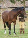 Paard in de Ring van de Show Royalty-vrije Stock Foto