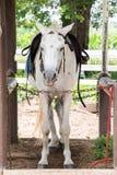 Paard in de stal Stock Foto's