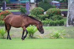 Paard in de tuin Royalty-vrije Stock Afbeeldingen