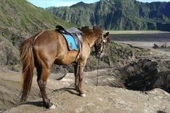 Paard in de vulkanen Royalty-vrije Stock Foto's