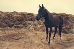 Paard in de werf Royalty-vrije Stock Afbeelding