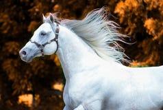 Paard in de wind stock afbeelding