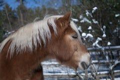 Paard in de winter stock foto's