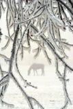 Paard in de winter Royalty-vrije Stock Afbeelding