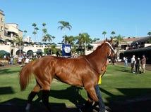 Paard Del Mar Fair San Diego Royalty-vrije Stock Afbeeldingen