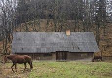 Paard dichtbij het huis Royalty-vrije Stock Foto