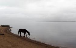Paard dichtbij rivieroever Stock Afbeeldingen