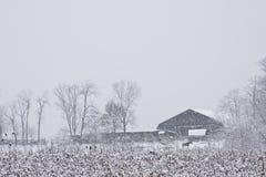 Paard dichtbij sneeuw behandelde schuur stock afbeeldingen