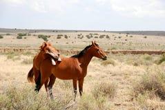 Paard die bovenop andere rusten Royalty-vrije Stock Afbeelding