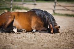 Paard die in de stal liggen openlucht Royalty-vrije Stock Foto
