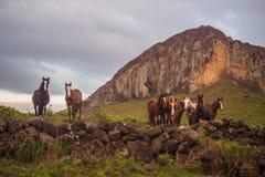 Paard die de vulkaan van Ranio Raraku op Pasen-Eiland onder ogen zien stock foto