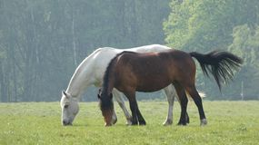 Paard 3 die in de weide weidt die ontbijt heeft stock foto's