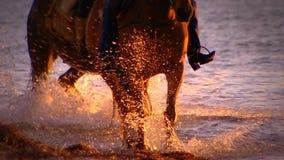 Paard die door oceaan lopen stock footage