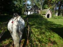 Paard die een Vervoer trekken Stock Afbeelding