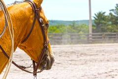 Paard die in Gebeurtenis concurreren Royalty-vrije Stock Foto