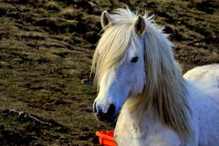 Paard die gras eten Stock Foto's