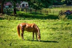 Paard die gras in landbouwbedrijf in zuidelijke Verenigde Staten eten stock foto's