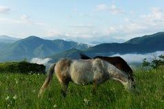 Paard die gras op de achtergrond van bergen eten Stock Foto
