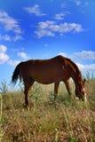 Paard die gras op gebied eten Stock Foto's