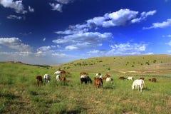 Paard die gras op gebied eten Stock Afbeeldingen
