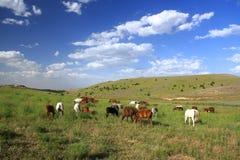 Paard die gras op gebied eten Stock Fotografie