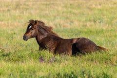 Paard die in groen gras op weide liggen stock foto's