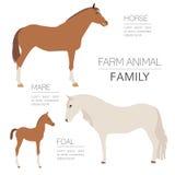 Paard die infographic malplaatje bewerken Hengst, merrie, veulenfamilie stock illustratie
