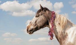 Paard die klatergoudsjaal dragen Royalty-vrije Stock Fotografie