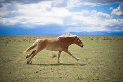 Paard die op Gebied lopen Stock Foto