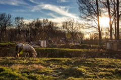 Paard die op trashy gebied eten Royalty-vrije Stock Afbeelding