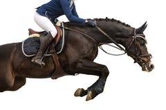 Paard die, RuiterdieSporten springen, op Witte Achtergrond worden geïsoleerd Royalty-vrije Stock Fotografie